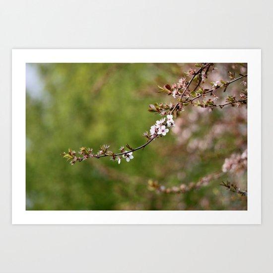 Blossom  - JUSTART © Art Print