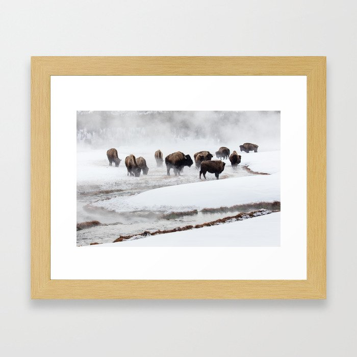 Yellowstone National Park - Bison Herd Framed Art Print