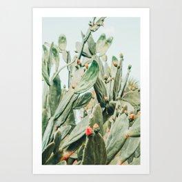 Pretty Cactus Art Print