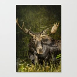 The Bull Moose Canvas Print