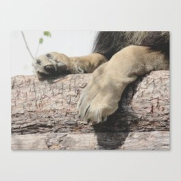 Look at Those Toe Beans, Man! Canvas Print
