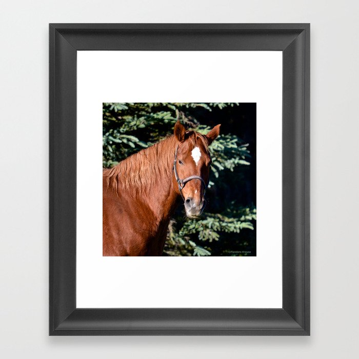 Miss Sadie - A horse, of course Gerahmter Kunstdruck