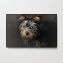 Yorkshire Terrier Puppy Portrait Metal Print