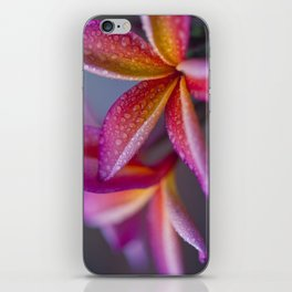 Windows into Nature iPhone Skin