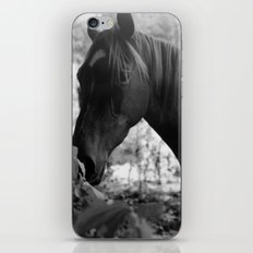 Quiescence iPhone & iPod Skin