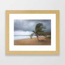 Windswept Palm tree Framed Art Print