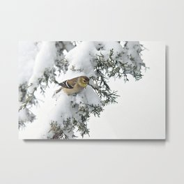 Snow and Ice Goldfinch Metal Print