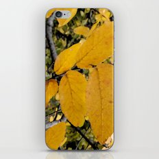 Yellow Leaves of Autumn iPhone & iPod Skin