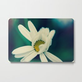 White, soft, flower Metal Print