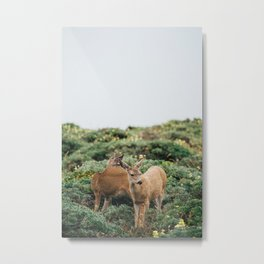 Wildlife at Point Reyes Metal Print