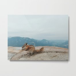 Chipmunk in Rocky Mountain National Park Metal Print