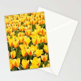 Plenty yellow and red Stresa tulips Stationery Cards