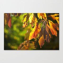 Autumn Sassafras  Canvas Print