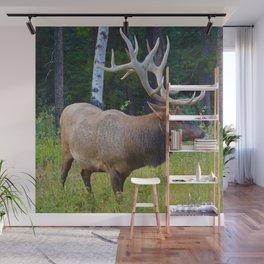 Bull Elk shows off his rack in Jasper National Park Wall Mural
