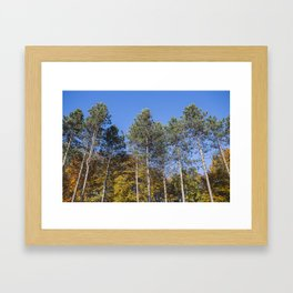 fall colours Framed Art Print
