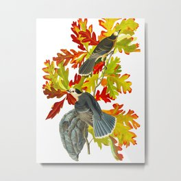 Vintage Canada Jay Illustration Metal Print