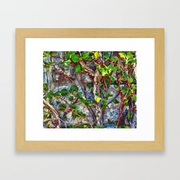 Climbing Vines - Nature's Art Work Framed Art Print