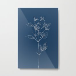Clematis Blueprint Metal Print