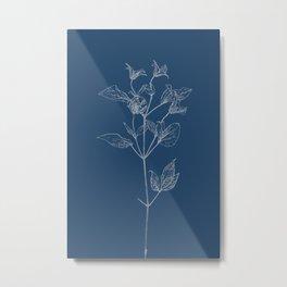 Clematis Blueprint Metal Print