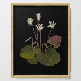 Cyclamen Europaeum  by Mary Delany Paper Collage Floral Flower Botanical Paper Mosaic Vintage Scientific Plant Anatomy Serving Tray