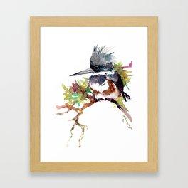 Belted Kingfisher Framed Art Print