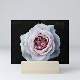 Velvet Mini Art Print