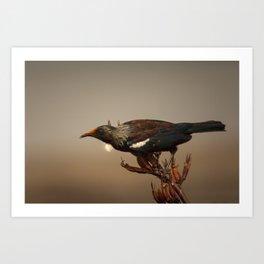 Tui on Flax Art Print