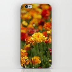 Yellow and orange ranunculus flower iPhone & iPod Skin