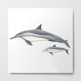 Long-beaked dolphin and baby Metal Print