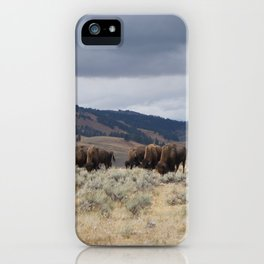 Bison in Yellowstone National Park iPhone Case