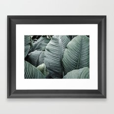 Banana Leaves Tropical Art Framed Art Print