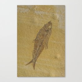 Fish Fossil Canvas Print