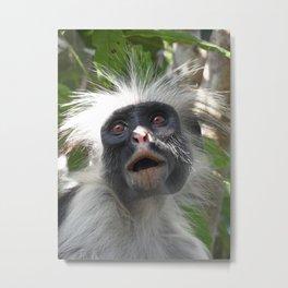 Red Colobus Monkey Metal Print