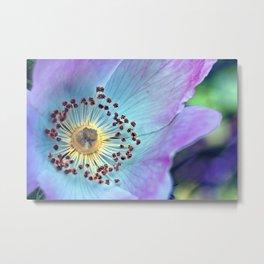 Wild Rose Colorsplash Metal Print