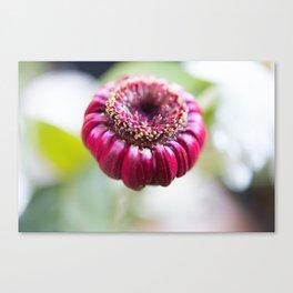 Unknown Flower Canvas Print