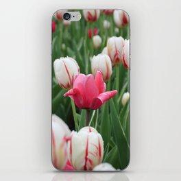 Pink among white iPhone Skin