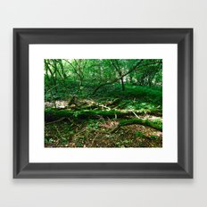 Boughs Photography Framed Art Print