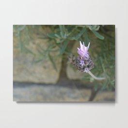 A Single Lavender Metal Print
