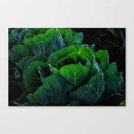 Cabbage Patch Darlings Canvas Print