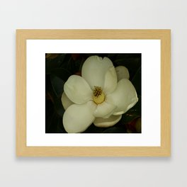 Southern Beauty Framed Art Print