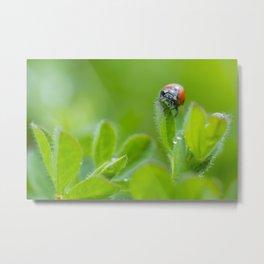 The Ladybug Metal Print