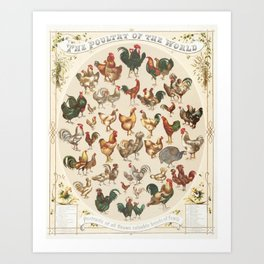 Poultry of the World - Vintage Chicken & Rooster Poster Art Print