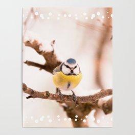 Blue tit on a branch #decor #buyart #society6 Poster