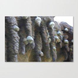 Chalk sketch of shells on stalactites Canvas Print