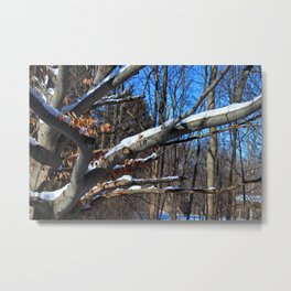 Branch Frosting Metal Print