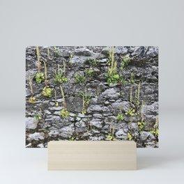 Perky Wall Garden Mini Art Print