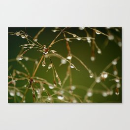 Branches of Dew Canvas Print