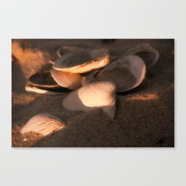 She Sells Seashells II Canvas Print