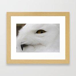 Snowy owl head Framed Art Print
