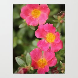 Neon Flowers Poster